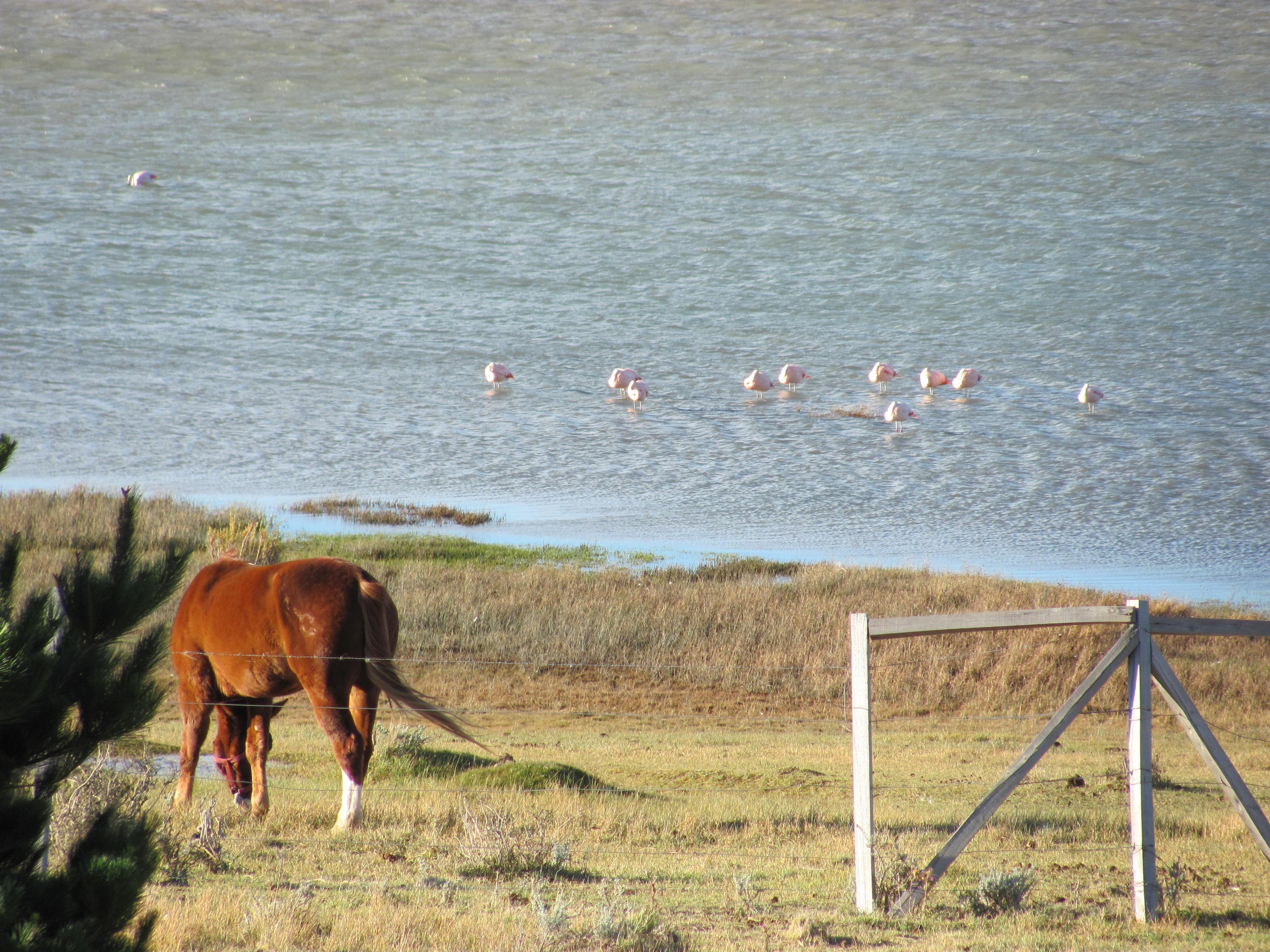 (8) Argentine : El Calafate, le parc des Glaciers «Fonte ou pas fonte» ?