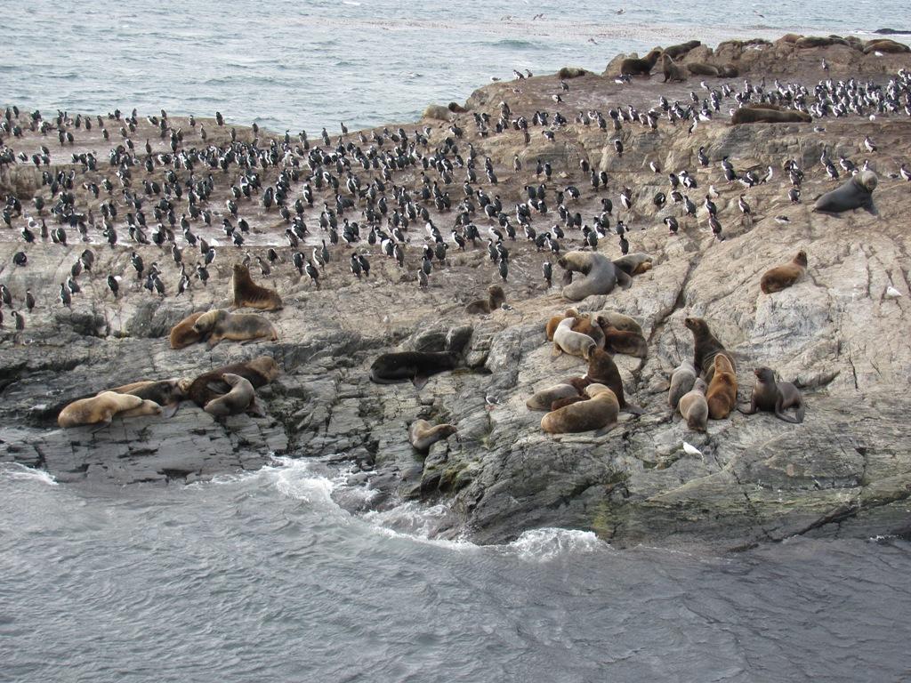 (11) Argentine : Canal Beagle, rencontre au fil de l'eau !