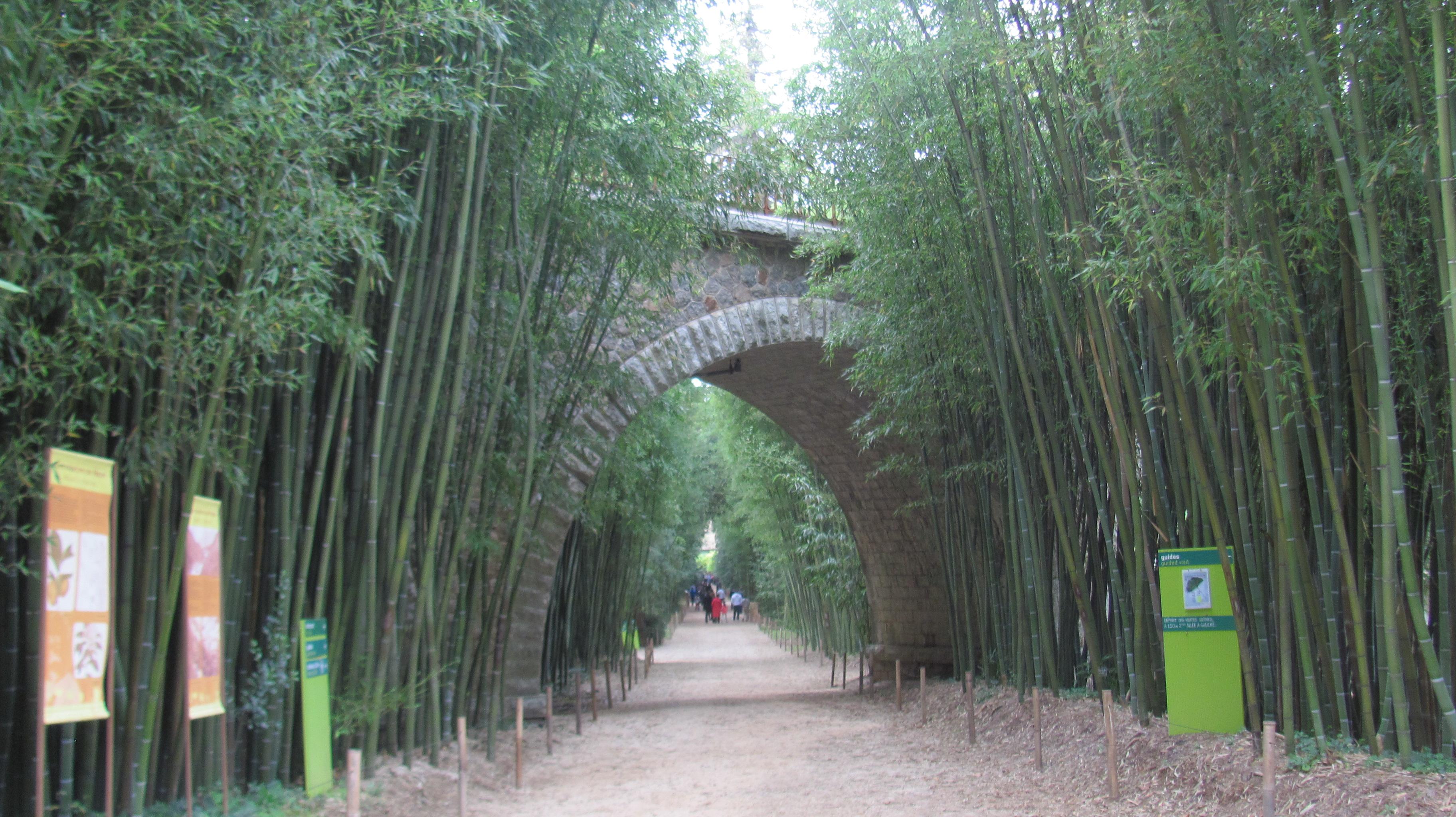 bambou rencontre