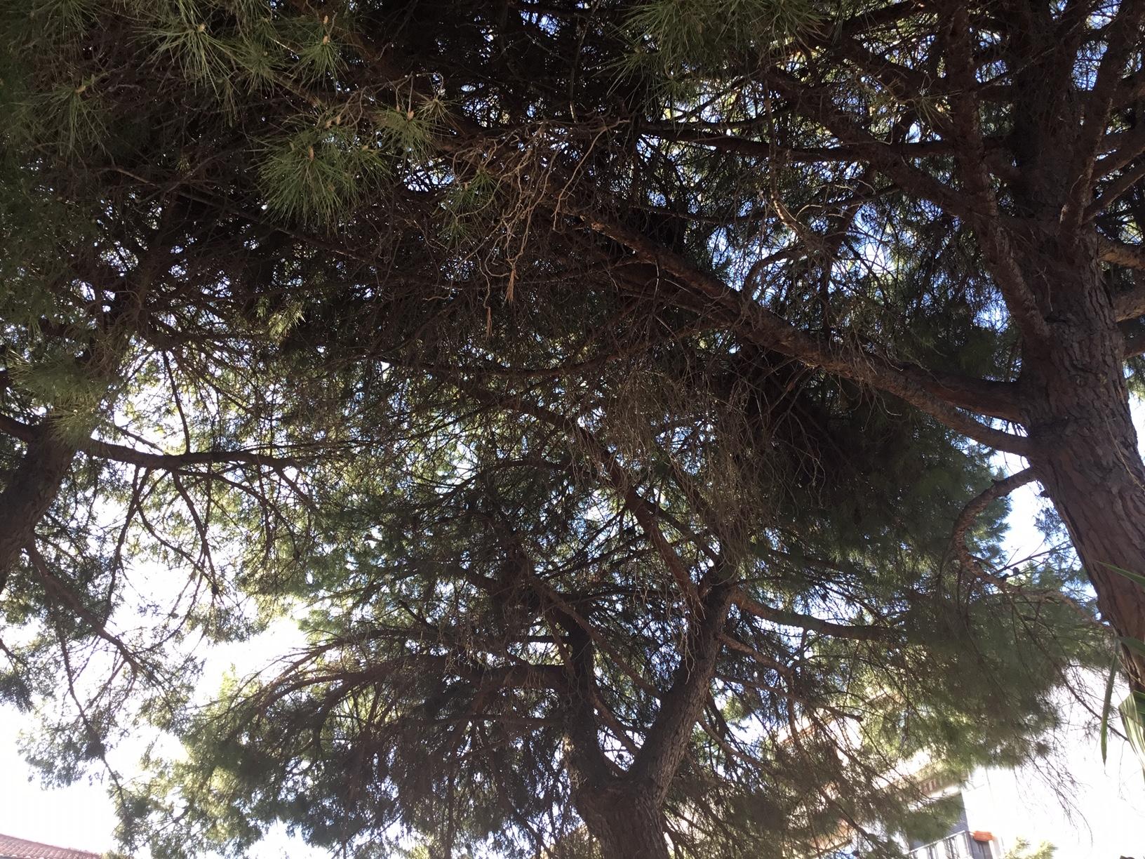 Déambulation printanière : L'arbre de la foret à la ville le même plaisir !