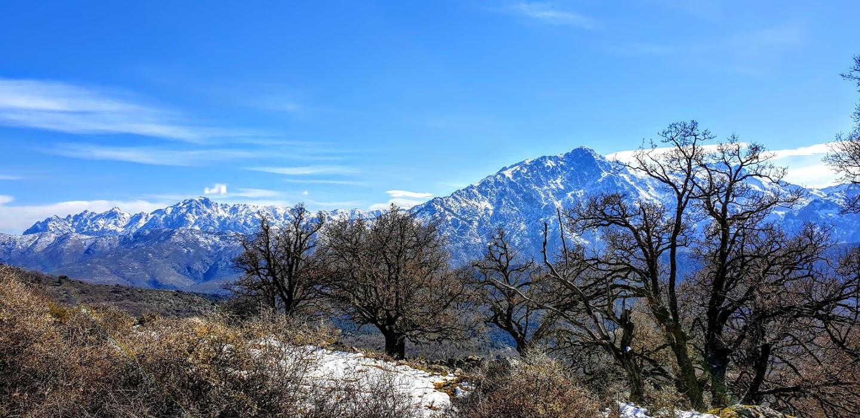 Escapade en Corse avec Michel : Col de Bataille , en haute Balagne avec chêne centenaire et en arrière plan le «Monté Padro»