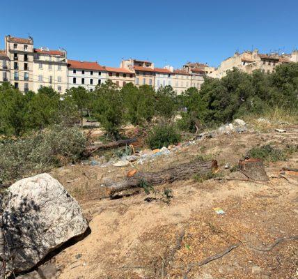 (2) Massacre à la tronçonneuse Porte d'Aix à Marseille : Les restes de la pinède de pins  – des pignes – On va rouvrir le dossier !