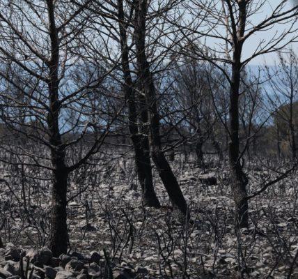 (2) Côte Bleue : Incendie gigantesque sur Martigues et Sausset les Pins : Réaction du MNLE 13″ L'ombre des vautours de l'Immobilier plane sur le drame».