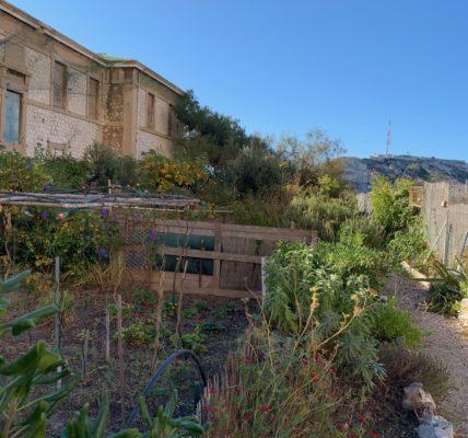 (4) Déambulations Automnales 2020 : Visite des jardins sur l'Archipel du Frioul –  Près du Pavillon Hoche (Ile de Ratonneau) –