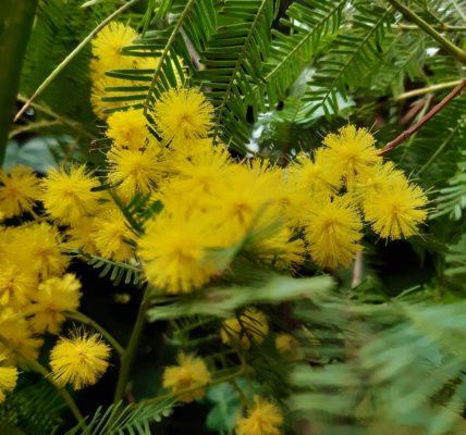 Le printemps frappe à notre porte : Dites le avec des fleurs !