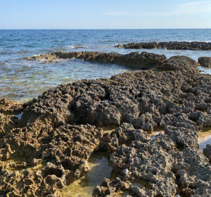 (6) Déambulations Estivales 2020 : Découverte de la flore de la frange littorale – Qui se développe dans un milieu difficile –