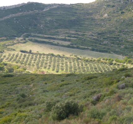(9) Déambulations Automnales 2020 : Téléportation dans les Pouilles – Préparation d'une rencontre avec Les acteurs locaux pour la préservation du paysage et des oliviers – Printemps 2021 !